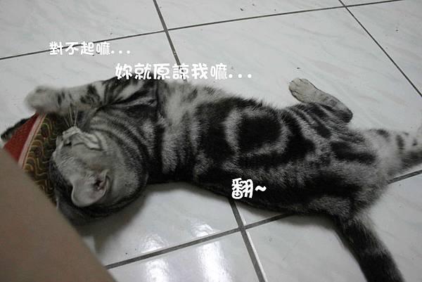 2011-10-04俏妞_02-1.jpg