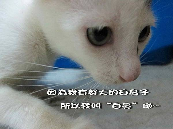 2011-11-02白鼻_5.jpg