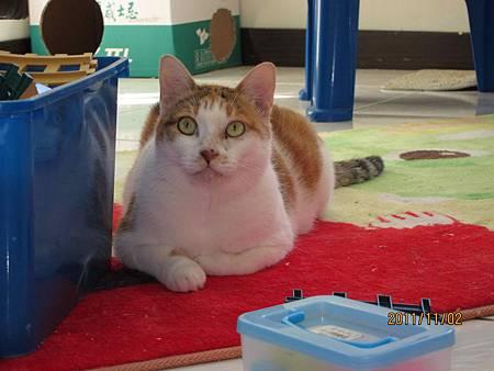 2011-11-02凱雅_2.jpg