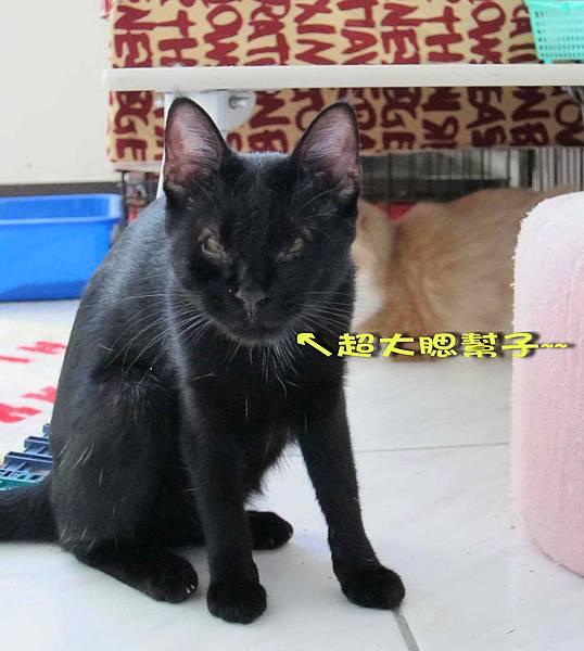 2011-11-02黛安 _3.jpg