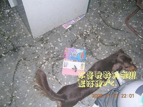 2006-11-07無辜的kalu.jpg
