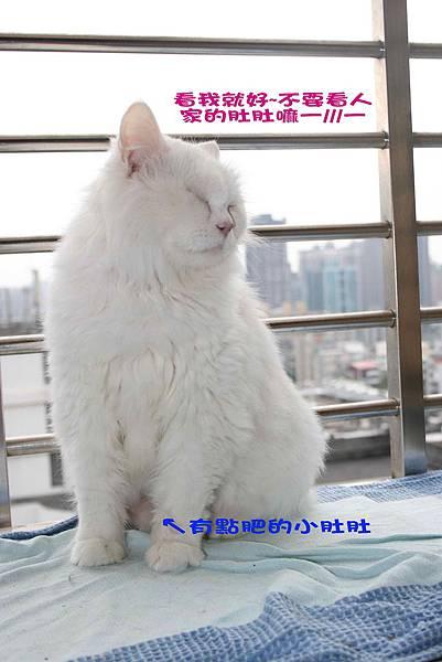 2011-11-27蒂芬妮_3.jpg