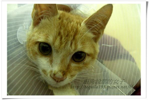 2012-12-07企貴ㄚ_022