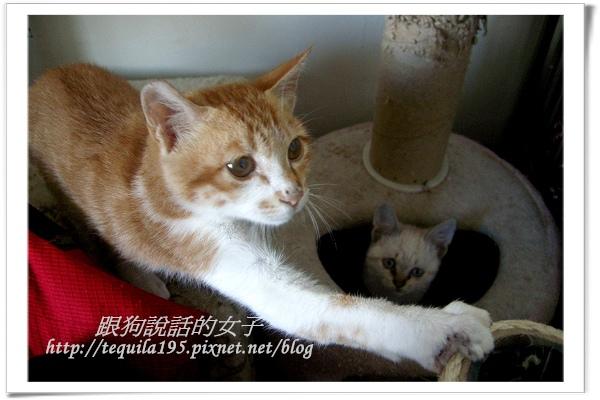 2012-12-13企貴ㄚ-哥哥保護妳 005