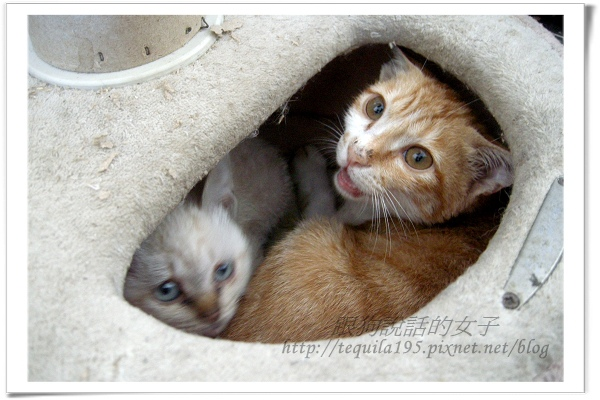 2012-12-13企貴ㄚ-哥哥保護妳-1