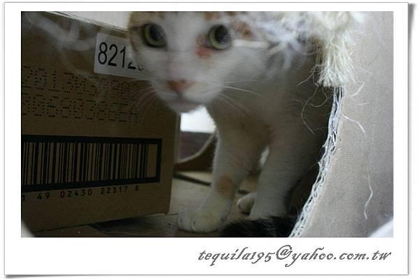 2011-05-25凱雅_05.jpg