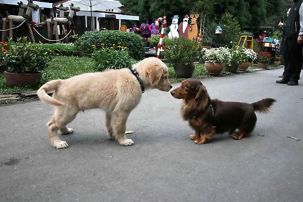 卡魯和拉拉喜相逢