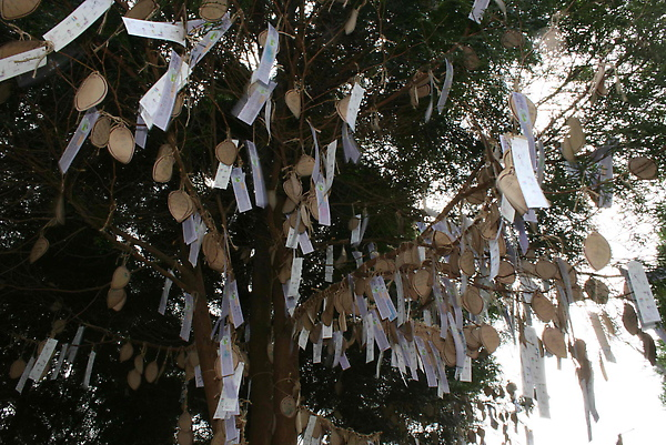 滿樹的祈願卡