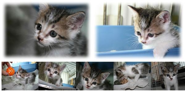 貓2010-10-12-1.jpg