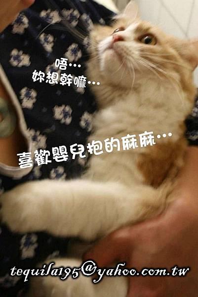 2011-05-27冉瑟剃毛__07.jpg