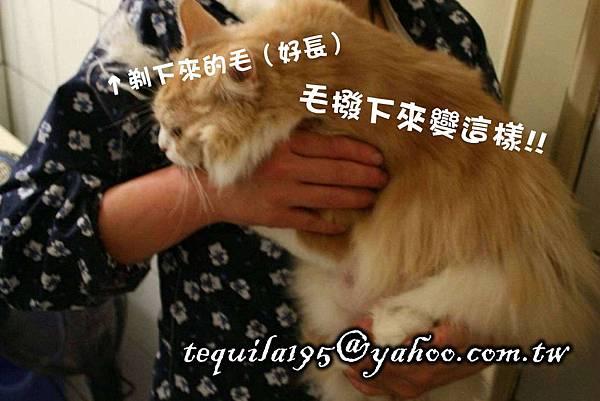 2011-05-27冉瑟剃毛__05.jpg