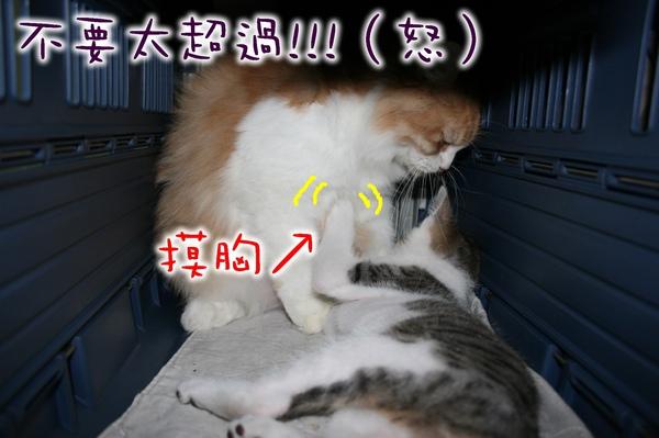 小M愛葛格4.jpg