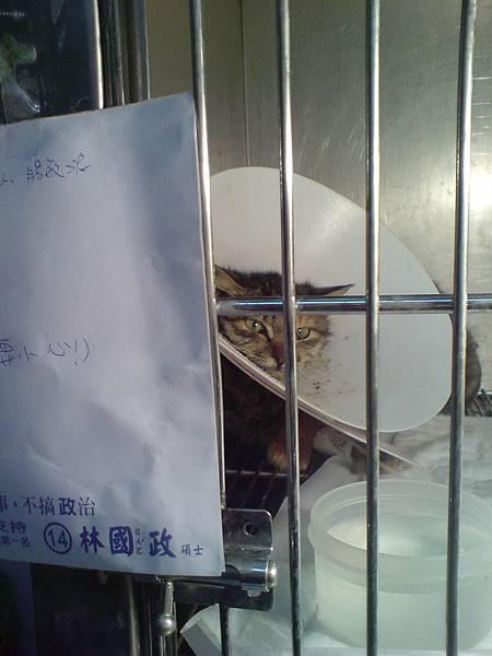 2011-03-29貓瘟第十二天_3.jpg
