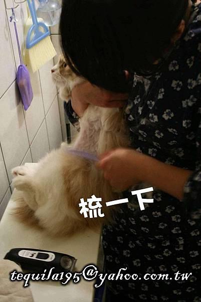 2011-05-27冉瑟剃毛__09.jpg