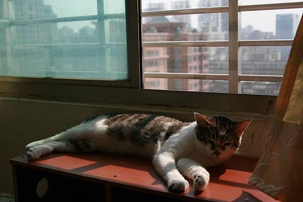 2011-04-26貓房_8.jpg
