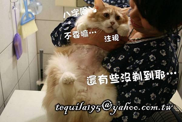 2011-05-27冉瑟剃毛__02.jpg