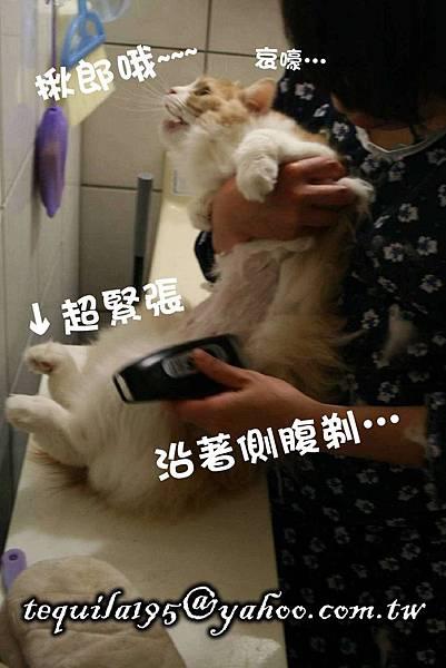 2011-05-27冉瑟剃毛__08.jpg
