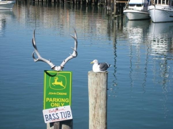 好肥的海鳥
