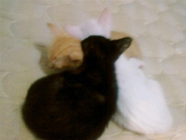疊疊樂睡姿