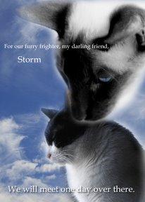 forstorm.jpg
