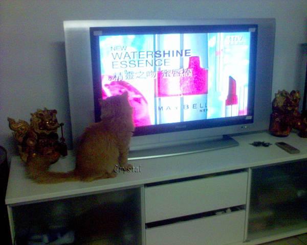 貓咪也喜歡Maybelline??