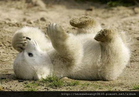 2009412113257055_小北极熊2.jpg