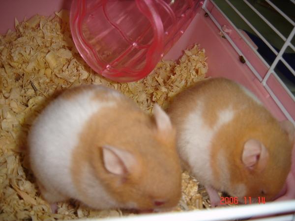 較大較白的是瓊斯,另外一隻是萊諾