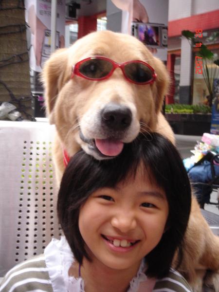太陽眼鏡掉的時候,狗狗還會聳鼻子自己調整眼鏡喔