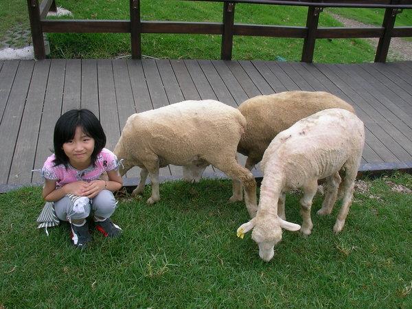 芃芃跟三隻小綿羊