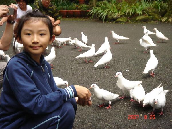 還有一堆不怕人的又白又肥的鴿子