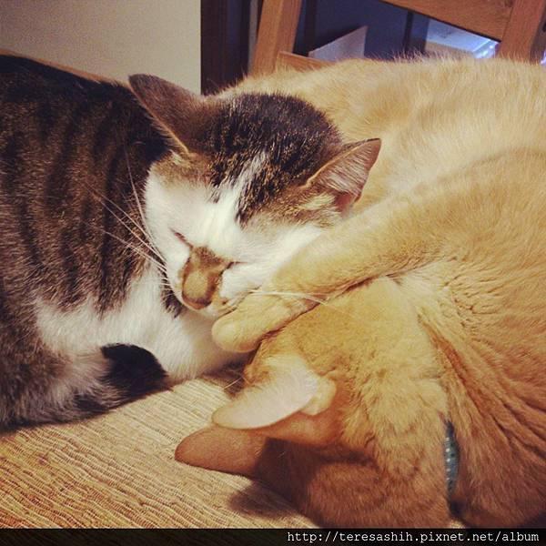不良示範,上課中睡覺的助教們