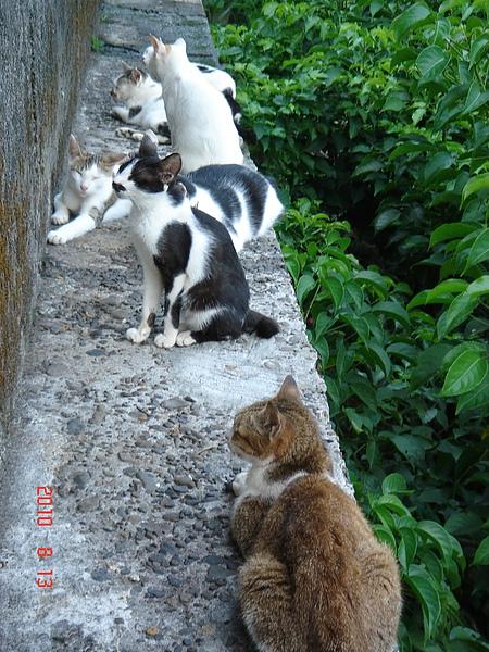 不起眼的地方竟然聚集了很多貓咪,這是調解委員會外面的圍牆..