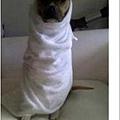 Moslem Dog