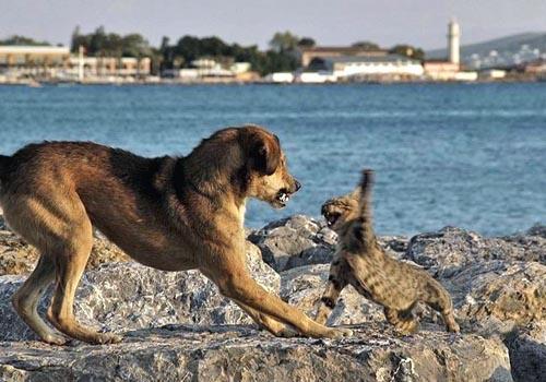 cat-dog-swat.jpg