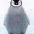 cute-baby-penguins.jpg
