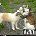 cute-puppy-pictures-cat-hugs-puppy.jpg