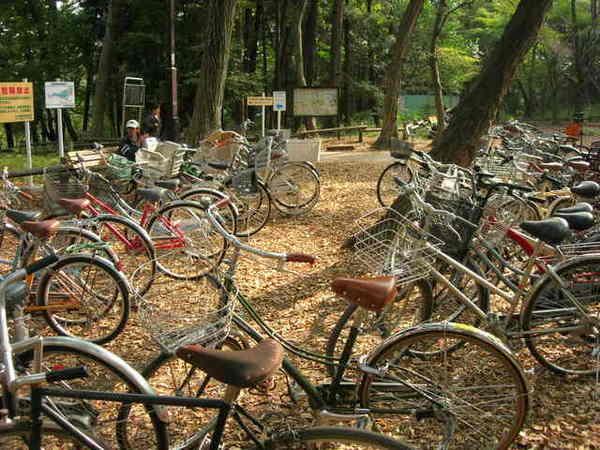每輛腳踏車都很美...不像我們髒髒舊舊