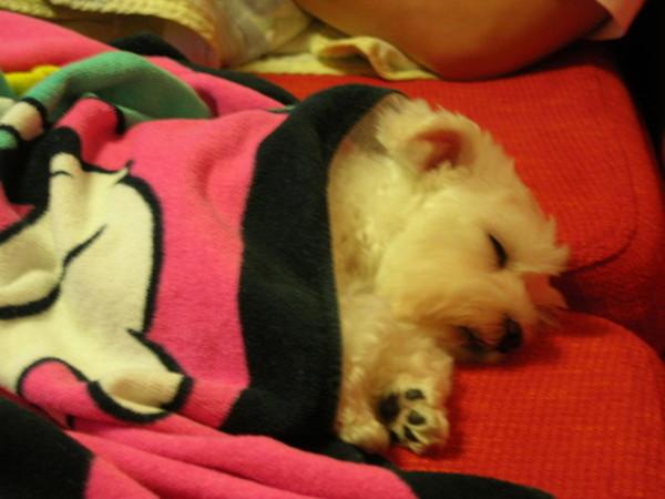 bibi睡成這樣