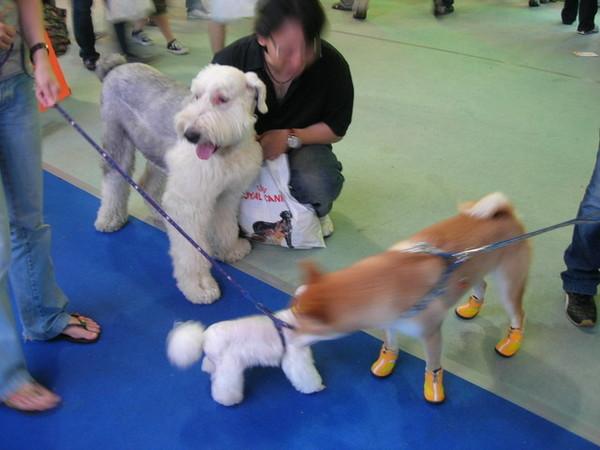 好多不同的狗狗...bibi今天可開心了