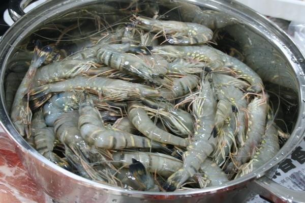 吃不完的草蝦