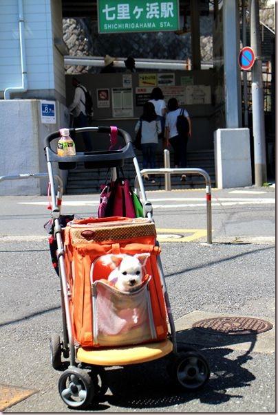 IMG_5303_副本