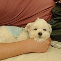 bibi以為自己是這家狗了