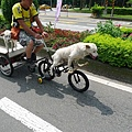 這隻狗好可憐,居然要幫主人騎車