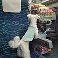 bibi第一次搭新幹線,在台灣也搭過高鐵