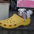 小腳穿大鞋,結果一整個可以當窩了嘛