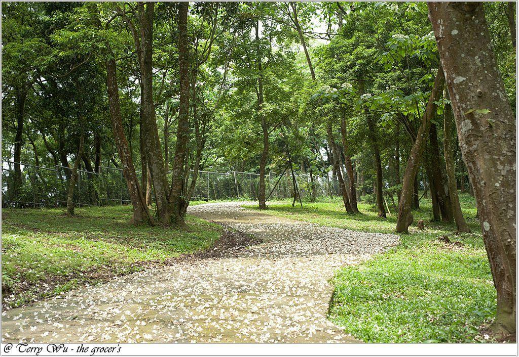 2012-04-22 自在森林的傳說唬人S型桐花彎道-13