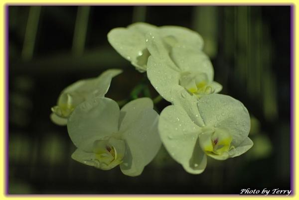 室外 窗台下的小花.jpg