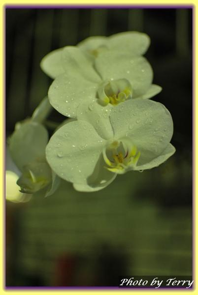 室外 窗台下的小花 (2).jpg