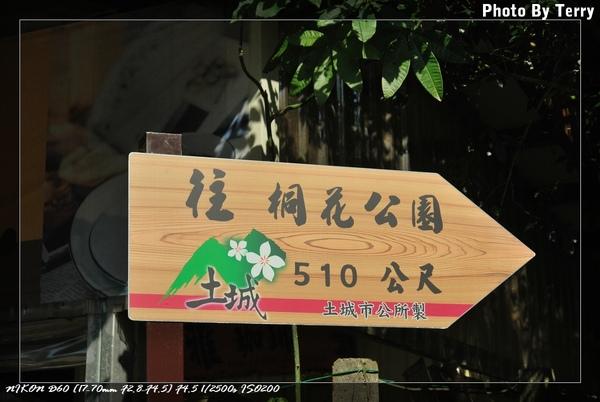 殘念的油桐花  (15).jpg
