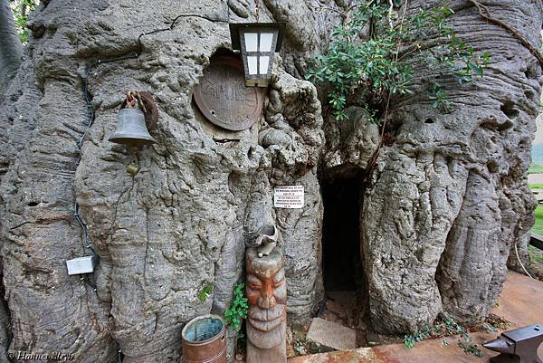 6000-year-old-hollowed-tree-bar-inside-40702.jpg